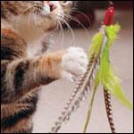 Cat Toys: Da Bird